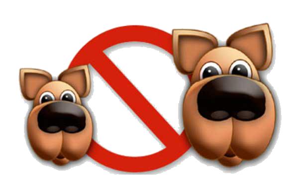 animaux interdits en été